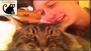 Grumpy Cat Claws And Attacks Vine Star Kid | CatNips