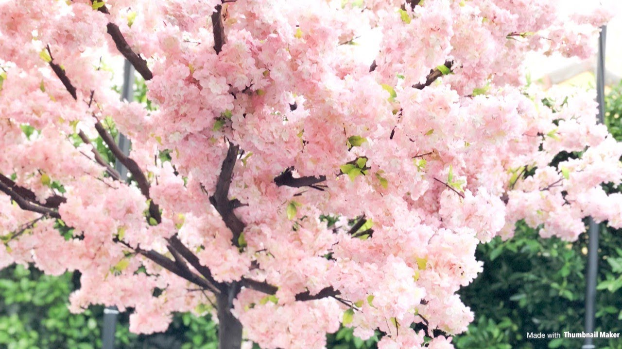 Cherry Blossom Tree Rental For Weddings Events Los Angeles Dreams In Detail