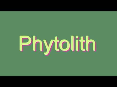 How to Pronounce Phytolith