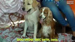 This Video Previously Contained A Copyrighted Audio Track. Due To A Claim By A Copyright Holder, The Audio Track Has Been Muted.     Dog Show Kolkata Hd Qualitybelghoria.