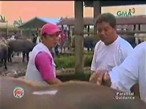 Padre Garcia Livestock Auction Market