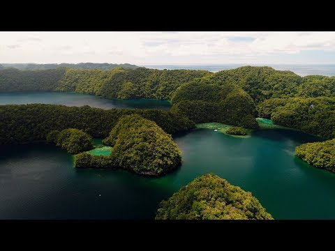 Coral classroom: Stanford students explore Palau