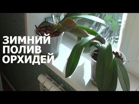 ЗИМНИЙ ПОЛИВ ОРХИДЕЙ как поливать орхидеи я буду - мой 15 летний опыт