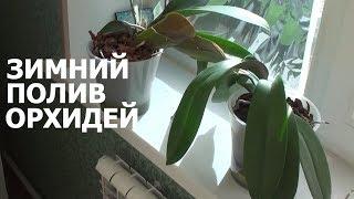 полив орхидеи зимой