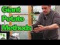 How I Grow Giant Potatoes