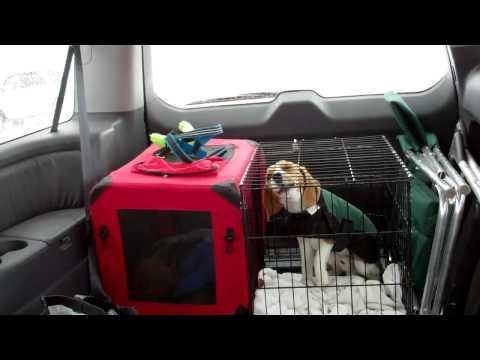 Dart Beagle's Big Wanna