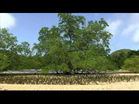 Constance Ephelia Seychelles - Greenglobe Environment Sustainability