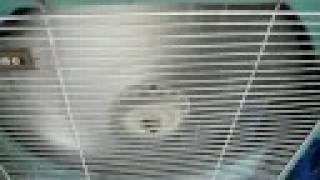 Vintage Eskimo 3-Speed Box Fan
