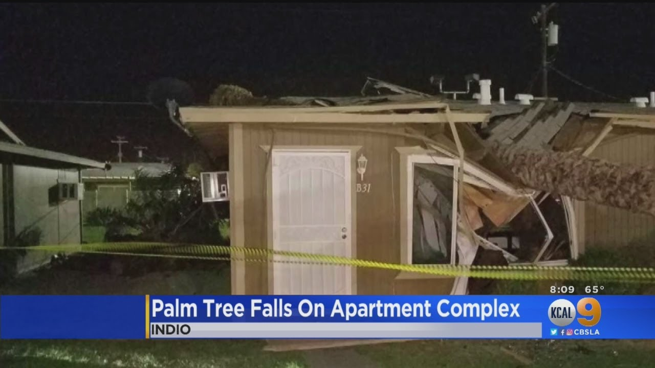 Downed Palm Tree Crashes Through Roof Of Indio Apartment Complex