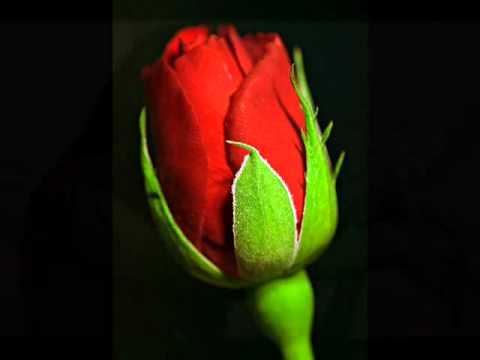 Tujhe Pyar Itna kiye Ja Raha Hoon.flv thumbnail