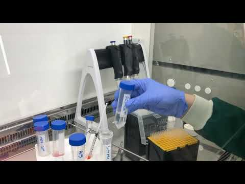 Generation of alginate spheres for 3D cell culture