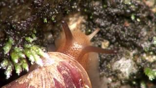 星見帰りの林道で虫を探しているときれいなキセル貝を見つけました。か...