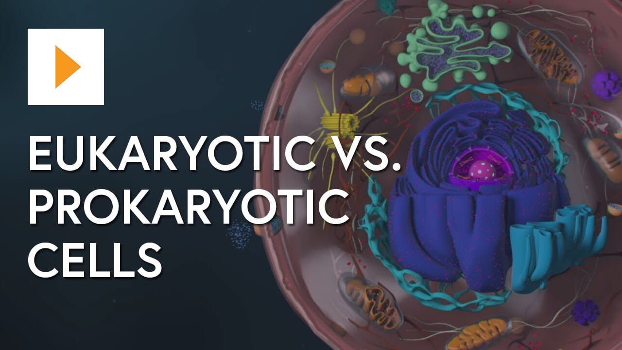 Eukaryotic Vs Prokaryotic Cells Youtube And Two Basic Types Of Biological