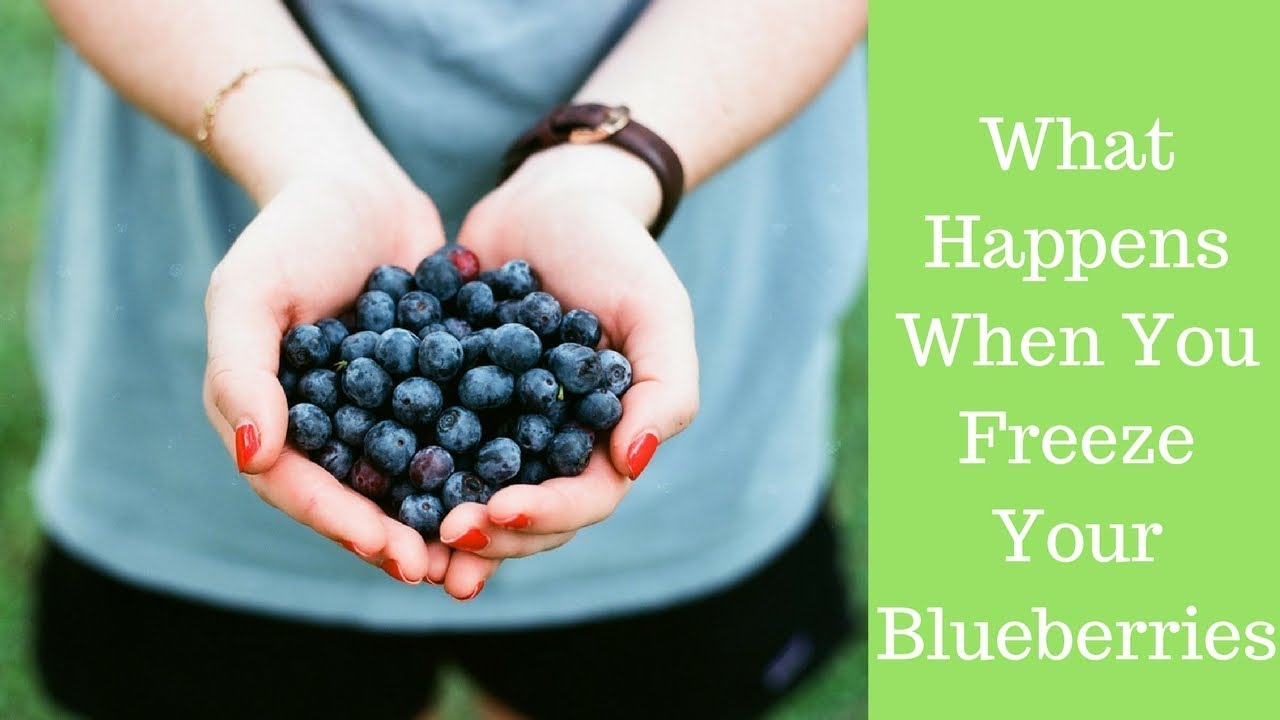 Blueberries Are advantageous to Heart Health and Recollection