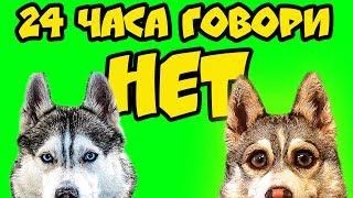 24 ЧАСА ГОВОРИ НЕТ (Хаски Бублик) Говорящая собака Mister Booble