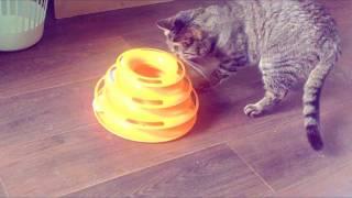 Игрушка для кошки. Aliexpress