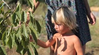 Рецепт изготовления натурального домашнего Яблочного уксуса, Здравые Вести №29