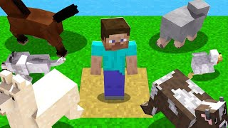 All Of My ANIMALS ESCAPED In Minecraft! (help)
