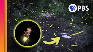 Bioluminescence: Nature's Fireworks!