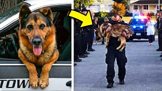 Police dog hears cop crying for help. Saves his life but ends in tears for everyone.