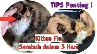 Mengobati Kucing Flu