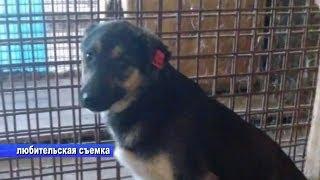 Очередное убийство чипованной собаки
