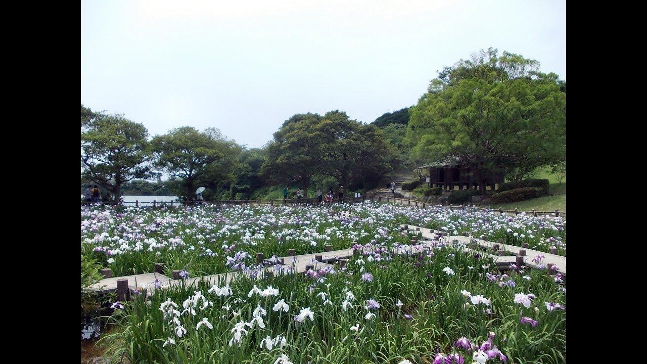 Iris Flower Garden At A Japanese Shrine Youtube