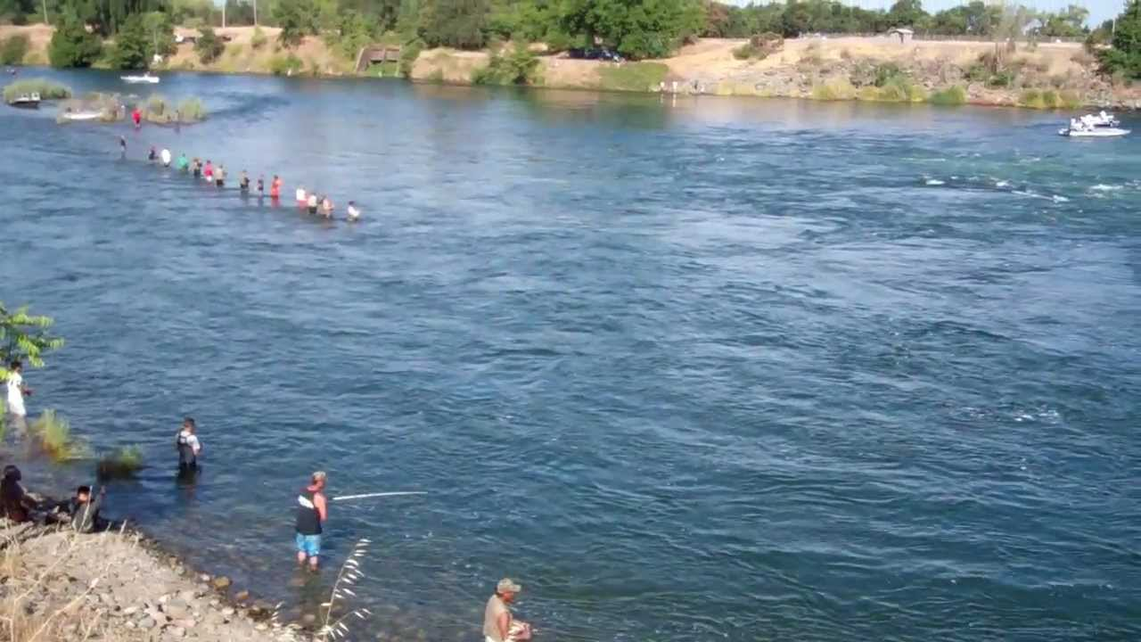 the feather river salmon outlet 2012 youtube