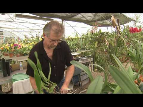 Orchid Growers - America's Heartland