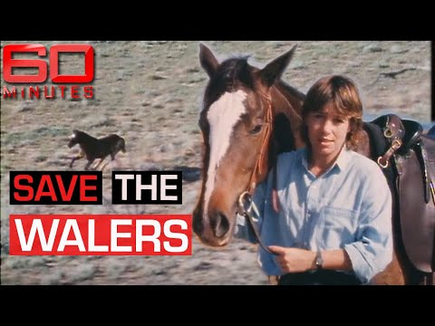 The 'Waler' horses