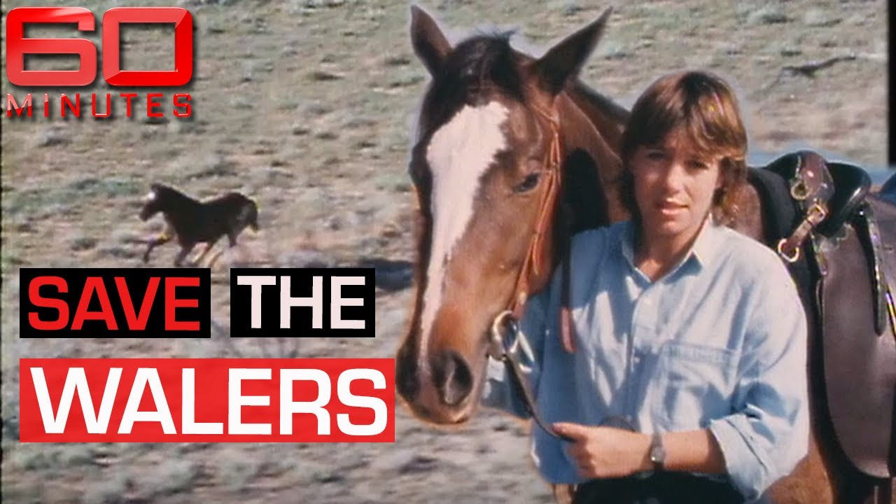 The 'Waler' horses facing mass culling in the Northern Territory | 60 Minutes Australia