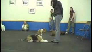 Verbal Commands - Sirius Adult Dog Training