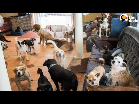 Couple Change Lives To Save Senior Dogs | The Dodo