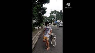 Kid Dog Trainer, Jogging Super…