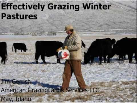 Grazing Winter Pasture