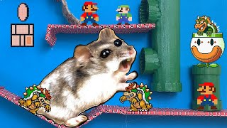 MARIO Hamster Obstacle Course Maze with Traps  + Escape Carnivorous Flower