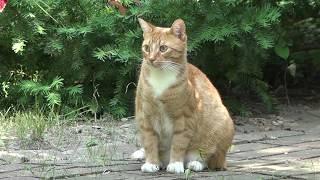 Мистер Макс и Катя в ШОКЕ Кошка Мурка опять беременная / Mister Max & Miss Katy