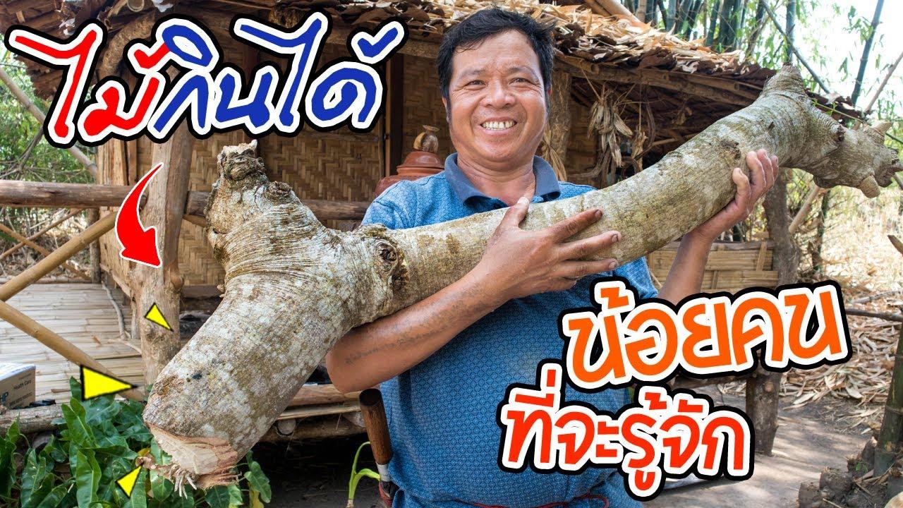 ทำอาหารในป่า สูตรครัวป่าไผ่ ต้นไม้กินได้ เมนูแปลก (แกะกล่องของจากFC) l SAN CE