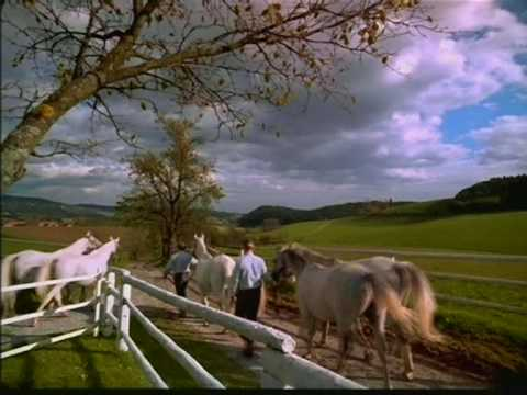 Majestic White Horses Part 2