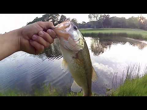 Golf Course Pond Bass Fishing - Summer Time Fishing - Long Island, NY