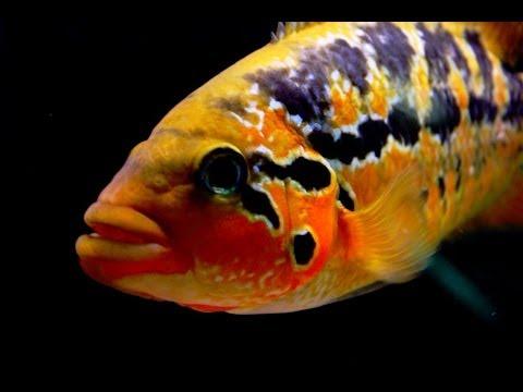 Fishroom Update 04012014