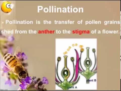 Sexual Reproduction In Flowering Plants | Pollination | Introduction & Importance | Types | Part 3