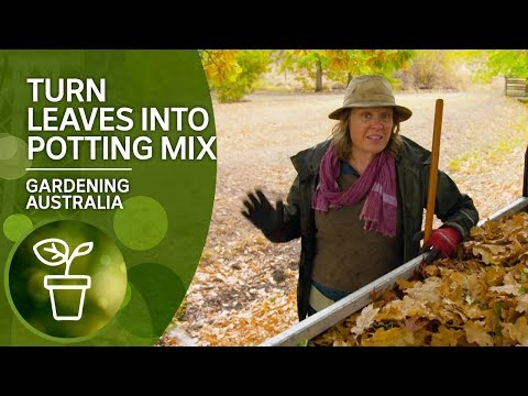 How To Turn Leaves Into Potting Mix
