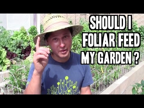 Should I Foliar Feed My Plants? and more Organic Gardening Q