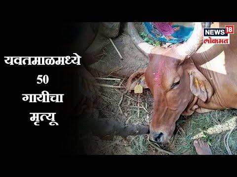 Ibn lokmat live marathi news hot women