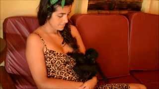 Repeat youtube video Chica mitad uruguaya amamanta un mono araña mientras su novio hace arroz