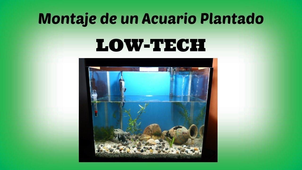 Acuarios plantados low tech - Montaje de acuarios ...