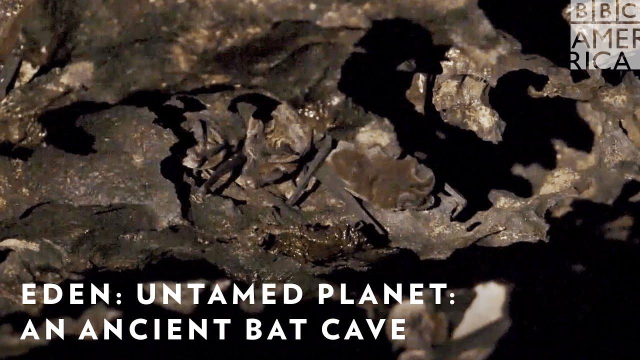 Explore an Ancient Bat Cave 🦇 Eden: Untamed Planet   BBC America & AMC