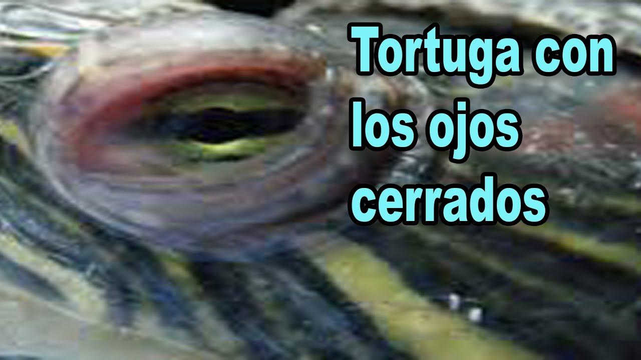 gotas para ojos hinchados tortugas