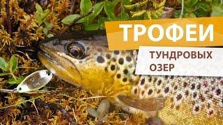 Рыбалка на Кольском. Безымянные озера в тундре